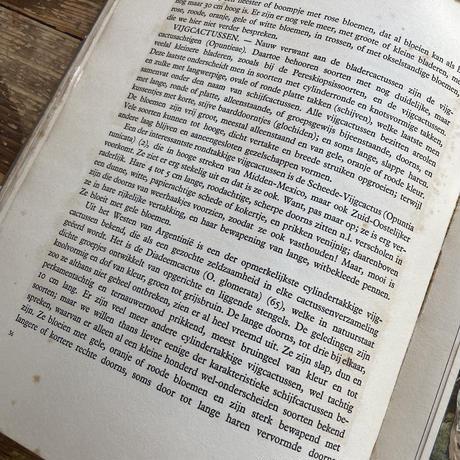 antique cactus book(a.j.van.laren)
