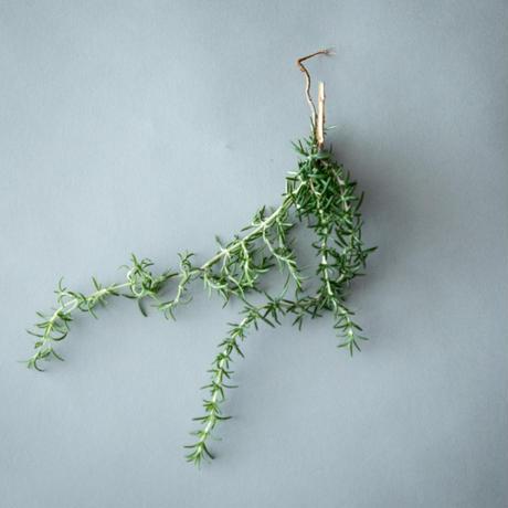 「Herb basket - natural 」(天然ハーブバスケット - ナチュラル)