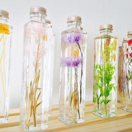 Herbarium from COCUENÄ