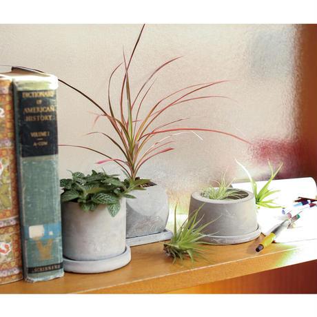 ■ダルトン■■2021SS 新作■ Cement pot Round  XSサイズ ミニサボテン 多肉植物