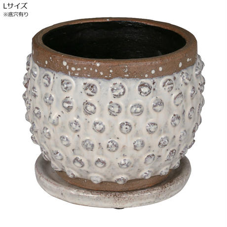 erracotta bubble pot  Lサイズ 亀甲竜 アガベ