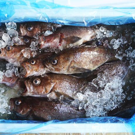 釜石の佐々木さんから届いた鮮魚の 下ごしらえセット(380g)/中山晴奈