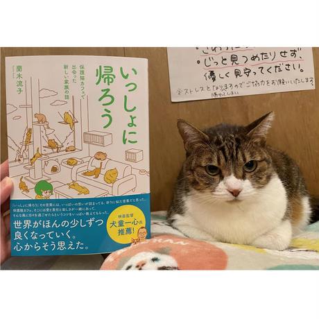 【ノベルティ付き】いっしょに帰ろう 保護猫カフェで出会った新しい家族の話