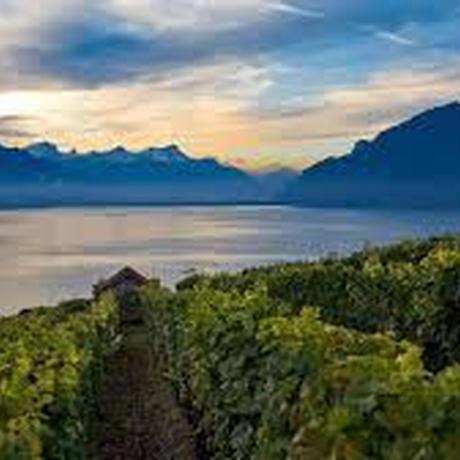 【Trioセレクション】スローフードに合う、めずらしいぶどう品種の白ワイン