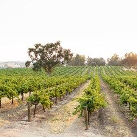 西海岸にいる気分で!カリフォルニアワイン(白・赤)6本セット