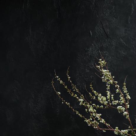 "A1黒のリストランテ""テーブルノワール"""