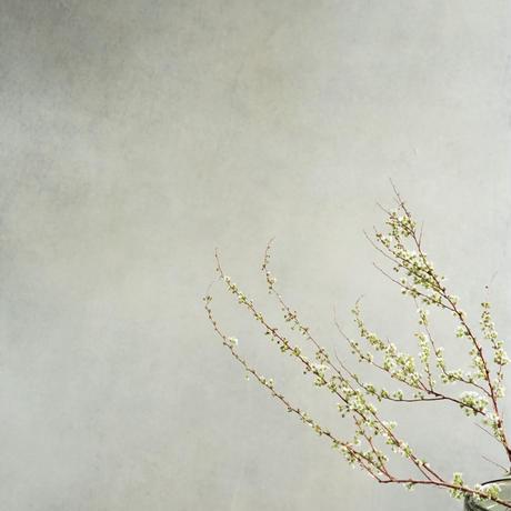 45ほのかに香るホワイトグレーニュアンスフレグランス第2世代