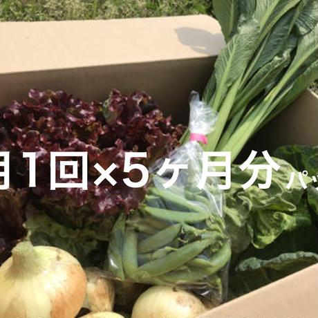 【月1回×5ヶ月分パック】季節野菜のセット ※税込、送料込