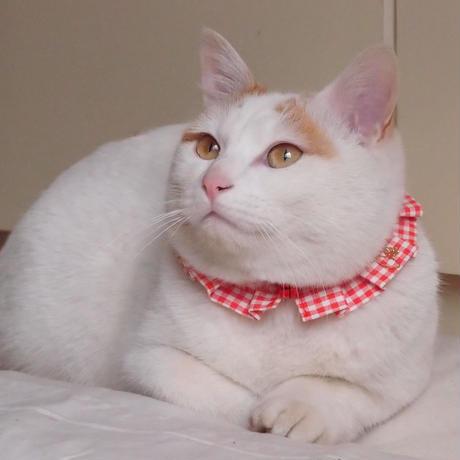 エシカルファッション『オシャ猫ラッフルカラー』レッド