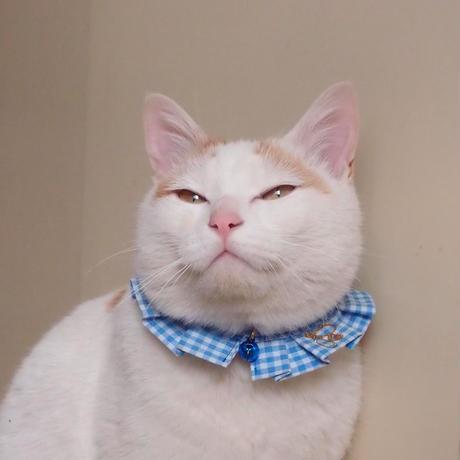 エシカルファッション『オシャ猫ラッフルカラー』ブルー