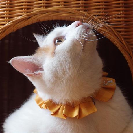 エシカルファッション『オシャ猫ラッフルカラー』イエロー