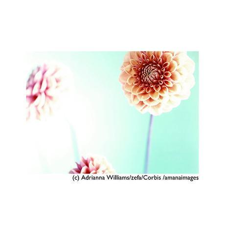 ポストカード【Three flowers】/花/植物