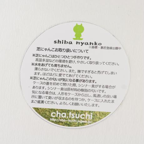 """cha.tsuchiさんの""""芝にゃんこ""""芽生えバージョン"""