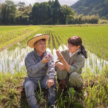 【定期便】コシヒカリ玄米900g 送料無料 900 円
