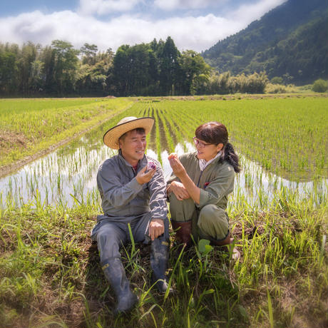 白米 10キロ 京都丹波コシヒカリ 令和2年度産 特別栽培米