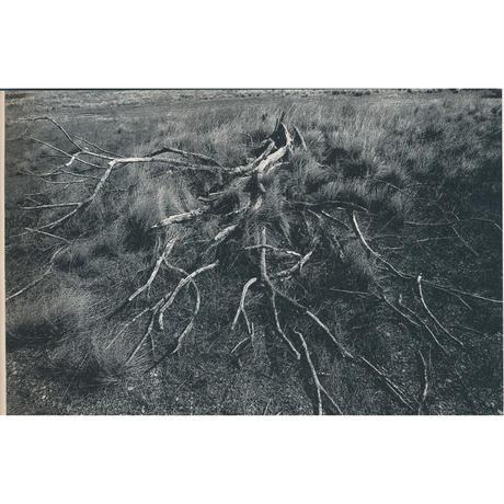 Crow look good in dead tree  枯れ木にはカラスが似合う 手焼きプリント付き