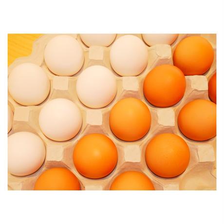 【定期便】紅白たまご 155個 + 5個保証(計160個)