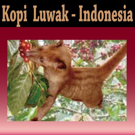コピ・ルアック(Kopi Luwak)。インドネシアスマトラ島に生息するジャコウネコが生む神秘な味