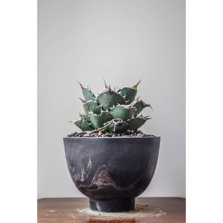 MarblePot20cm(Bowl)/Black with Light Charcoal 10個セット