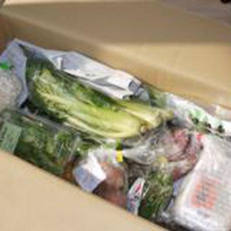 無農薬野菜 詰め合わせ 15点セット