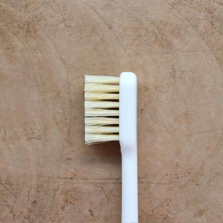 SASAWASHI / 天然豚毛歯ブラシ(ふつう)
