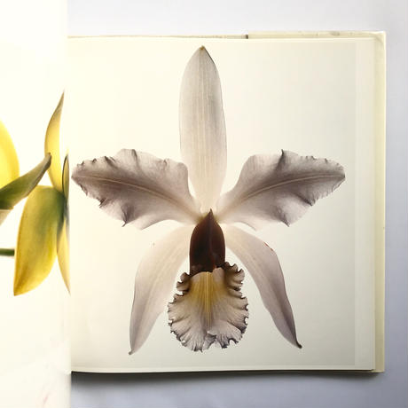 Title/ Flowers Author/ Irving  Penn