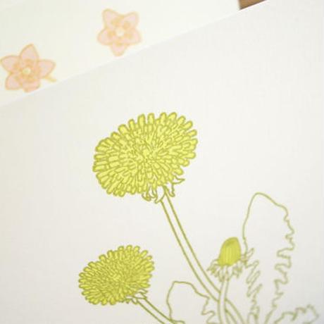 Dutch Botanical Postcard