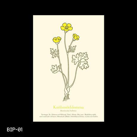 Swedish Botanical Postcard