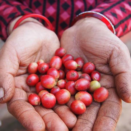 太陽とヒマラヤの恵み ハニープロセス珈琲|粉|レギュラーサイズ|ネパール産