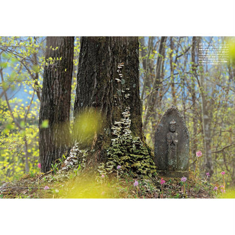 【今森光彦】写真集『オーレリアンの庭ー生きものと暮らす里山のアトリエからー』