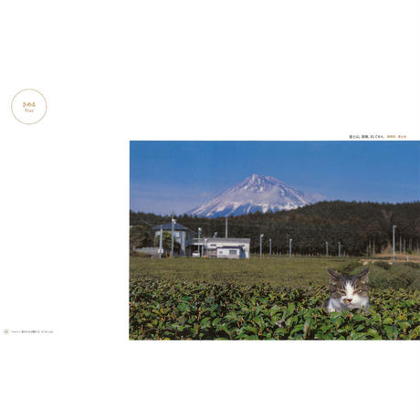 【岩合光昭】写真集『ねこ』