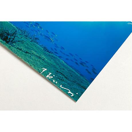 【中村征夫・購入特典】トートバッグ ウメイロモドキ (サイン入りポストカード付き)