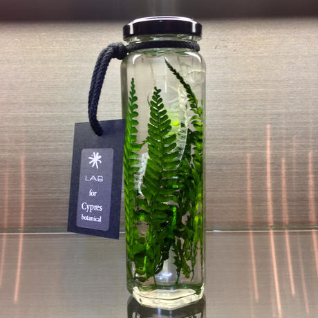 Lab bottle plants LIMITED 200ml (downy grand fern)