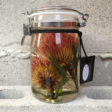 Lab bottle plants 1ℓ (pincushion)
