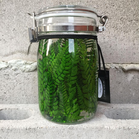 Lab bottle plants 1ℓ (grand fern)
