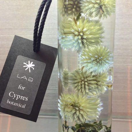 Lab bottle plants LIMITED 200ml (echinopus green)