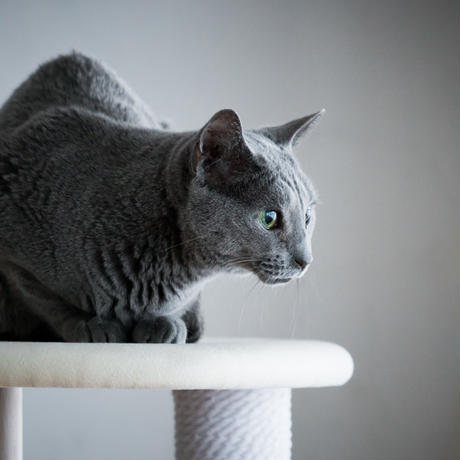 KARIMOKU CAT TREE  ライトグレー&ピュアオーク