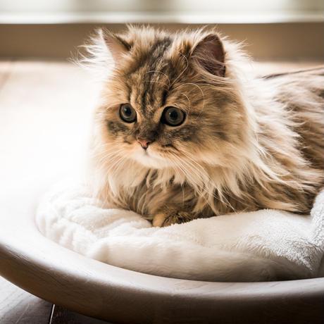 KARIMOKU CAT BED ブルー&モカブラウン