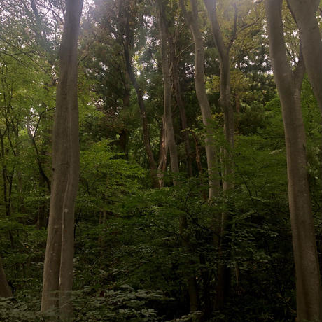 東京香堂 Incense /  Seasonal Series  - 山桜 - (数量限定)
