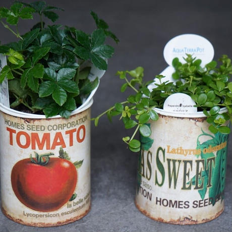 アクアテラポット アソート鉢セット 観葉植物 グリーン お洒落 インテリア ナチュラル 新生活 ギフト