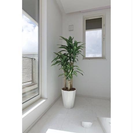 幸福の木1.6〈EL0003〉