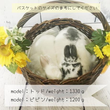 5b4f5dedef843f165400031d
