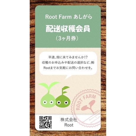 Root Farmあしがら 配送収穫会員券(3ヵ月)