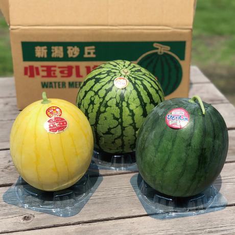 【7/1〜販売】斉藤雅一さんの 小玉スイカ3個 味くらべギフト