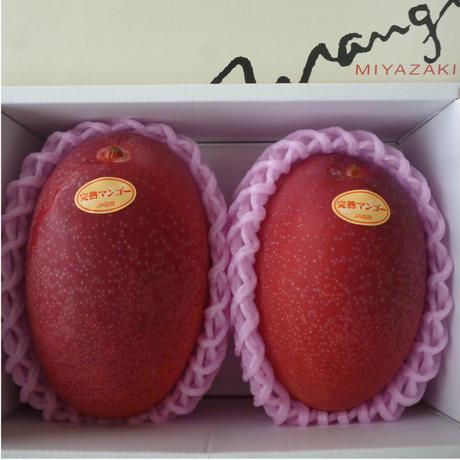母の日、父の日にいかがですか 宮崎特産 完熟マンゴー4Lサイズ2玉入り 1玉約500g/1Kケース