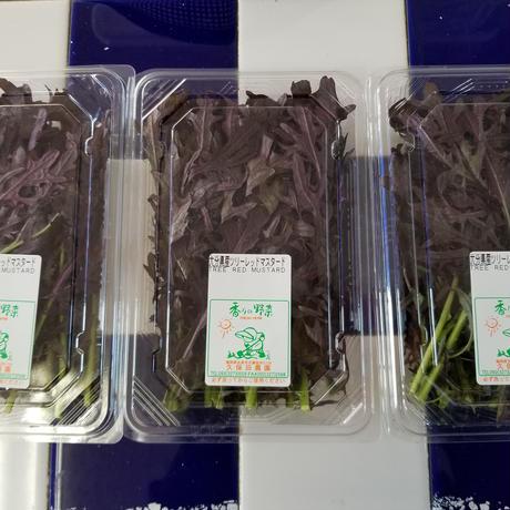福岡産 久保田農園 【ツリ-レッドマスタ-ド】3パックセット