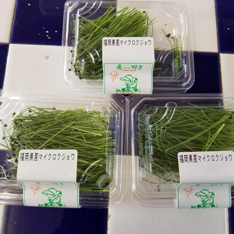 福岡産 久保田農園 ハーブ マイクロクジョウ 3パック/セット
