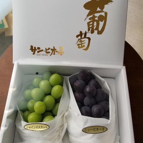 高級ぶどうの詰め合わせ 福岡朝倉産 種無し シャインマスカットとピオ-ネのセット