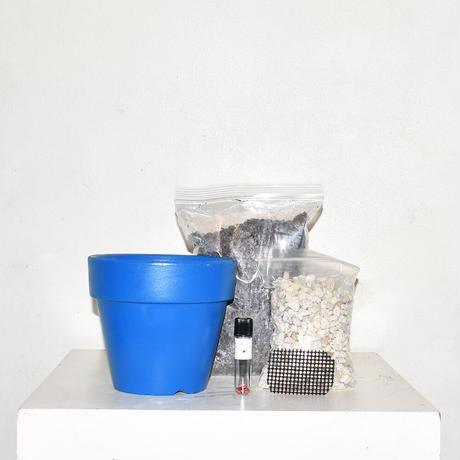 Sun flower cultivation kit