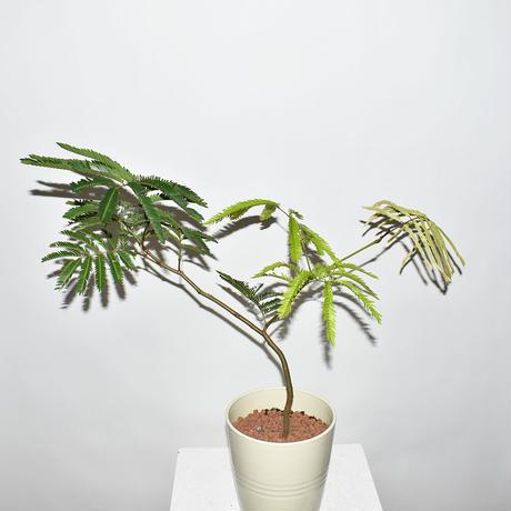 Everfresh Tree-2